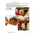Understanding the Horse's Back Ebok